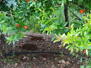 חודל בגינה